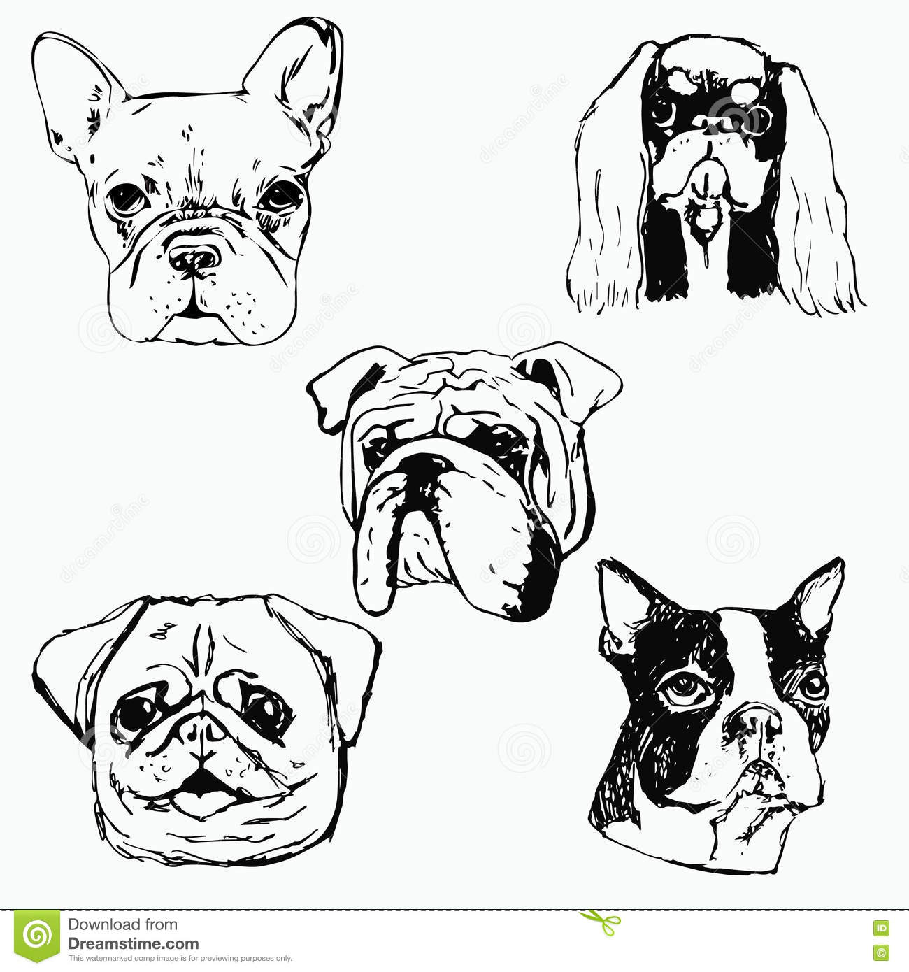 Hand Drawn Dog Portraits On White Background Stock Vector