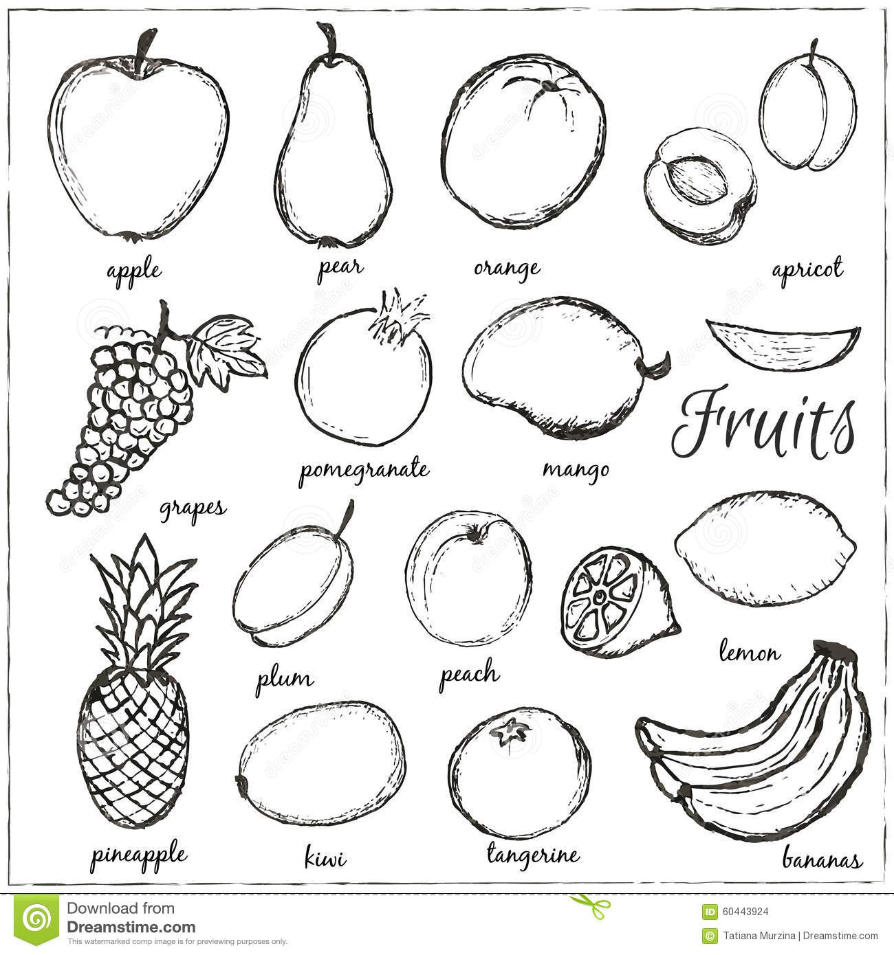hand drawn doodle fruits with name stock vector