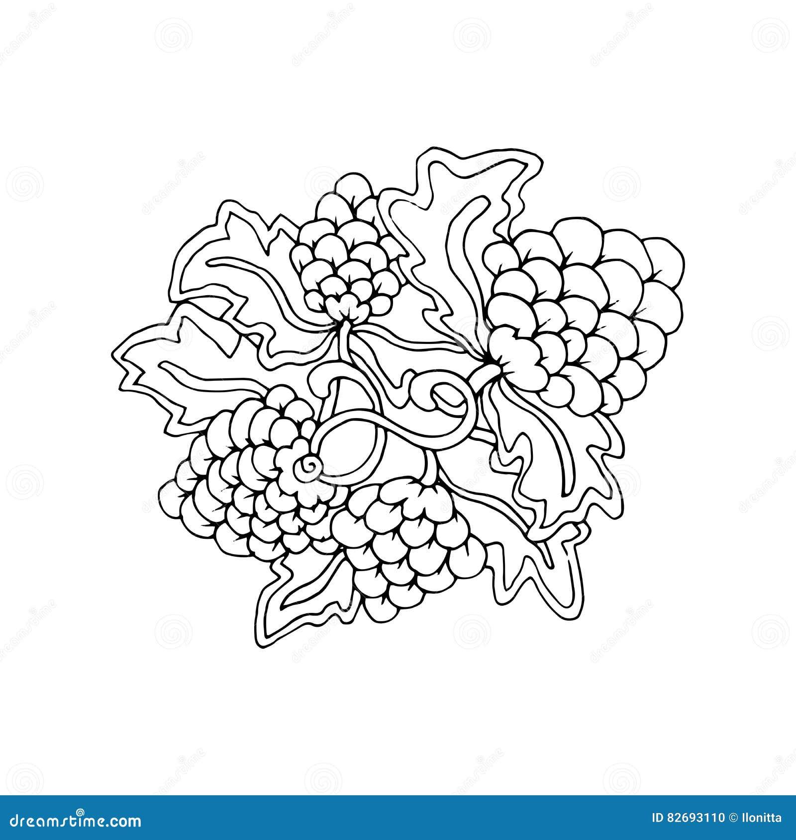 Coloring Grape Stock Illustrations – 226 Coloring Grape Stock ...