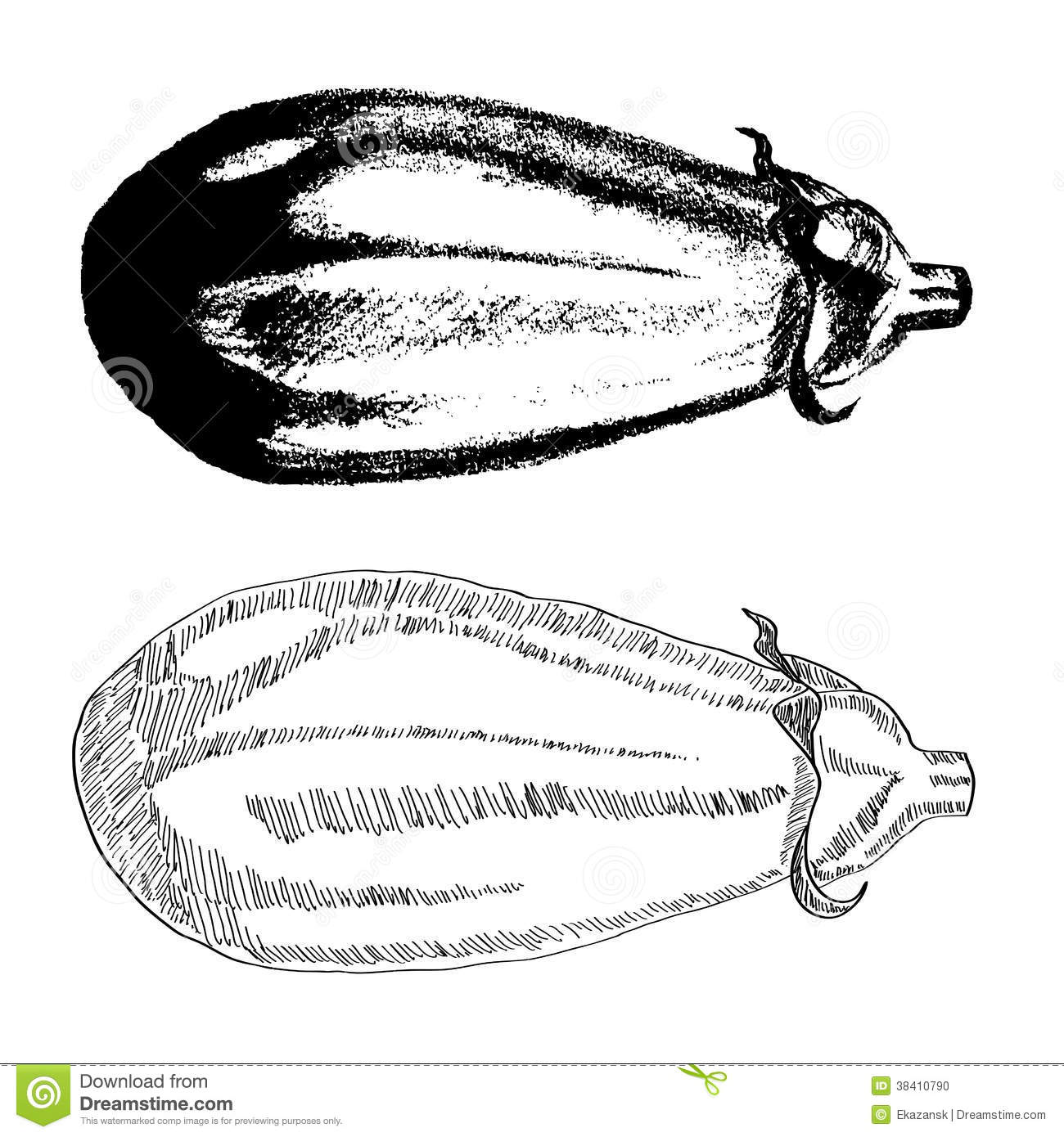 Line Drawing Zucchini : Hand drawn eggplant stock photo image