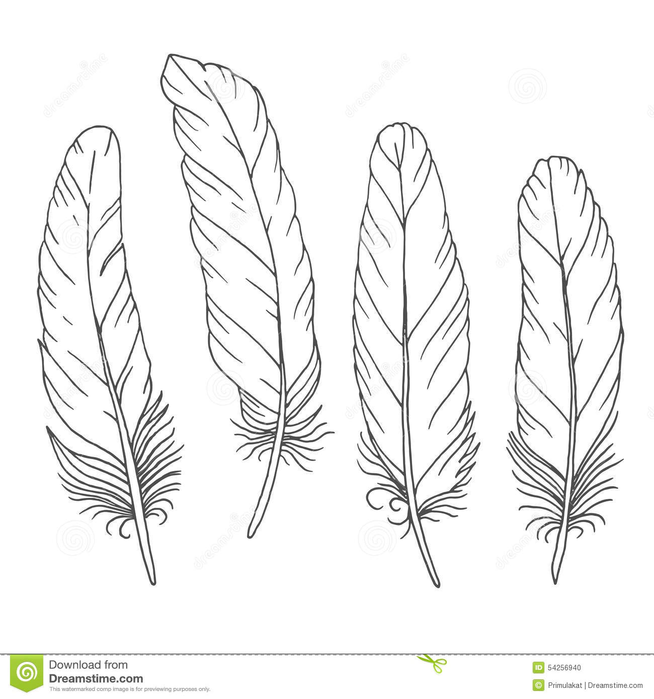 Line Drawing Feather : Hand drawn feathers set on white background stock vector