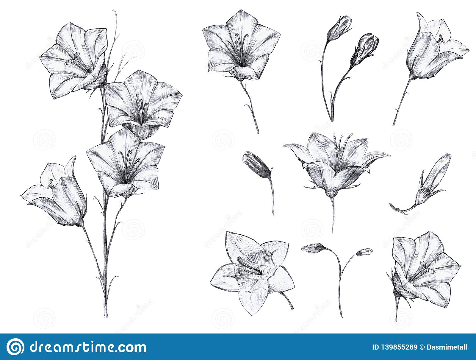 Hand drawn floral set of isolated objects with graphic bluebell flowers, stem, buds on white background