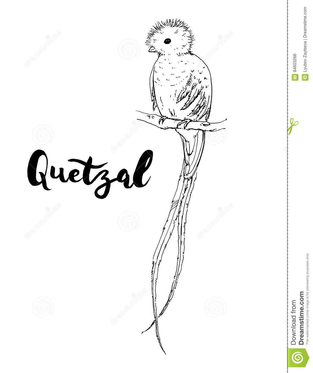 hand drawn graphic isolated bird quetzal with handwritten words