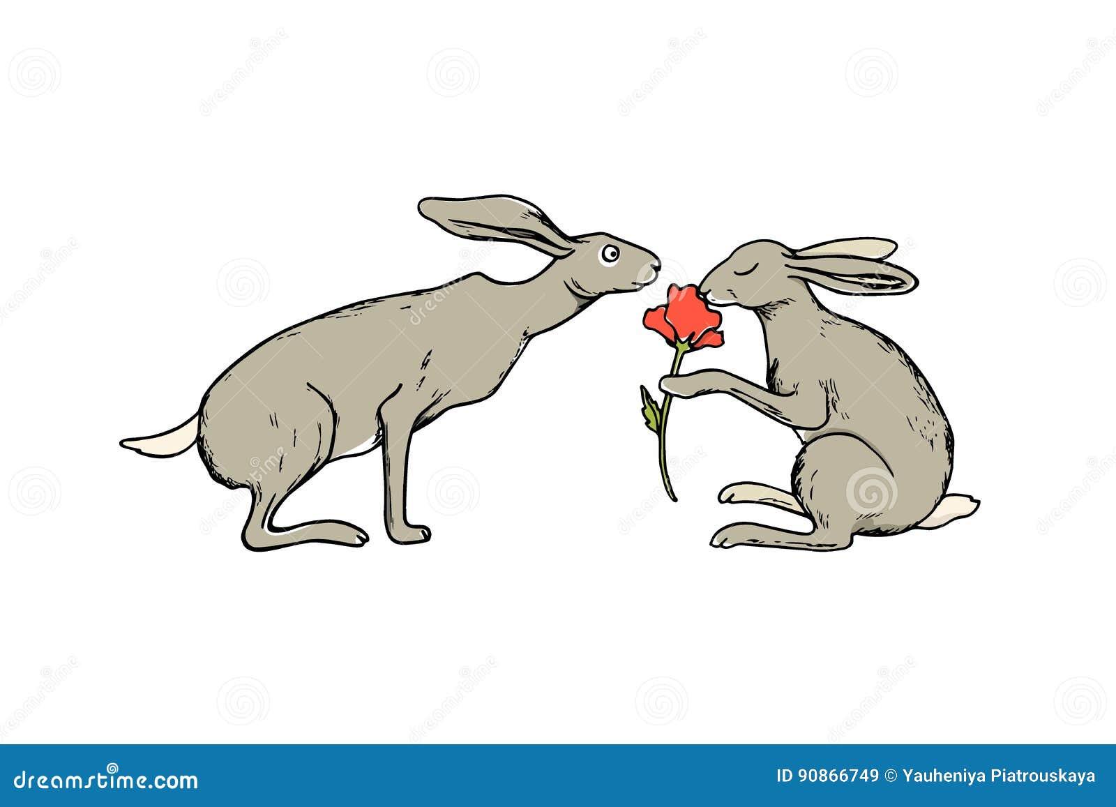 Tilde hare do it yourself