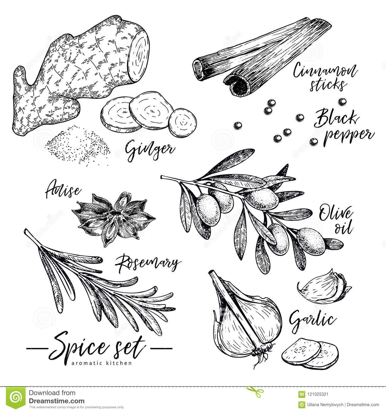 Hand Drawn Herbs Spices And Condiments Set Vector Ginger Cinnamon
