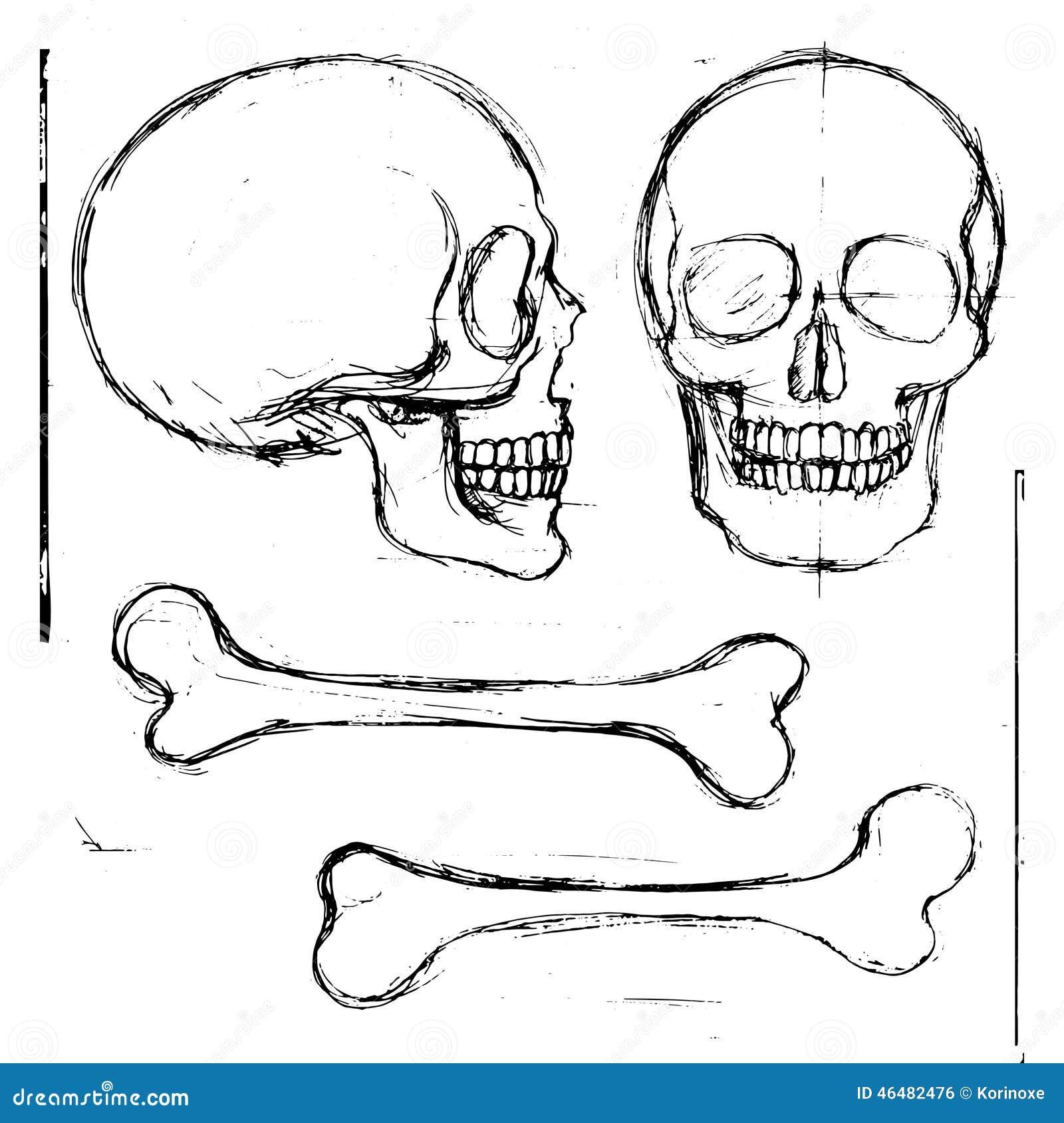 Hand Drawn Human Skull And Bones Stock Vector - Illustration of ...