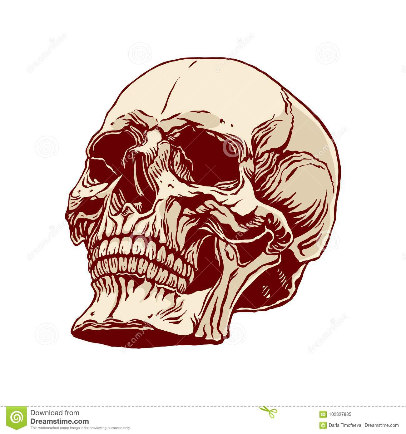 Hand drawn human skull stock vector. Illustration of brown - 102327885