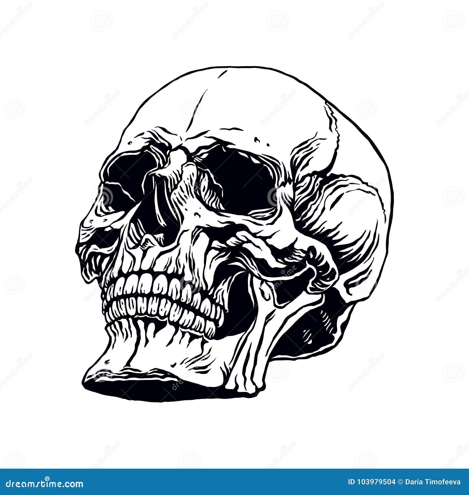 Hand Drawn Human Skull Stock Vector Illustration Of Halloween