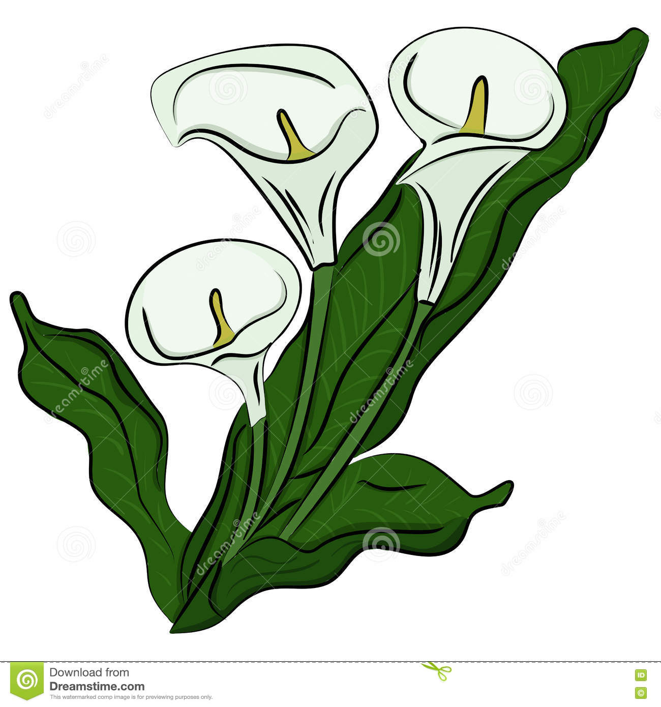 Hand drawn illustration of a calla stock vector illustration of download comp izmirmasajfo