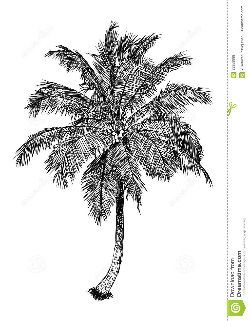 palm tree with coconuts drawing - photo #14