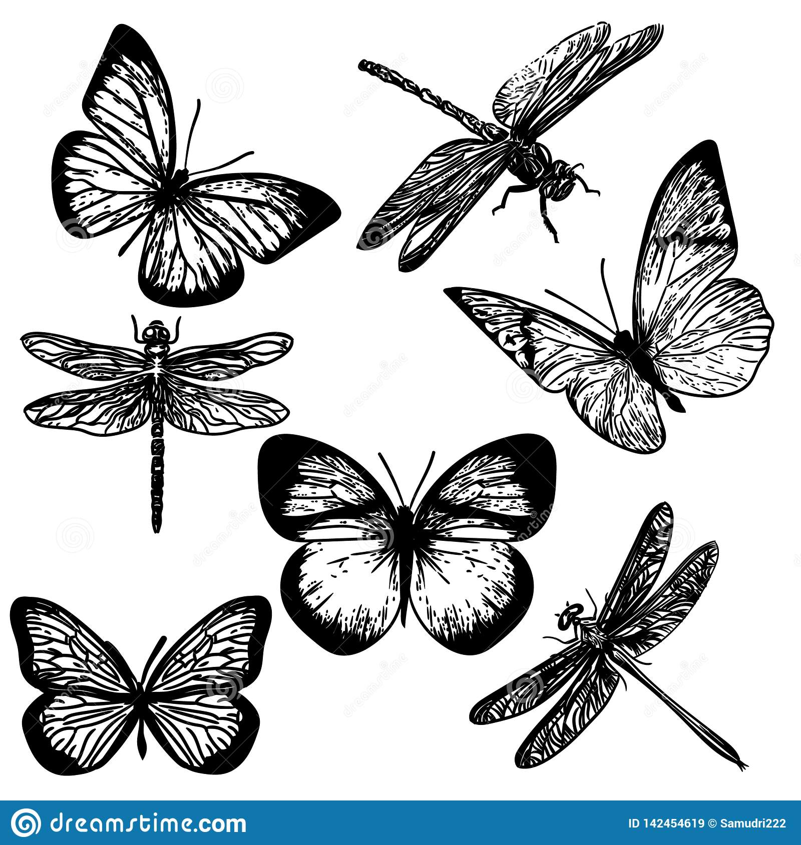 Hand drawn of insects