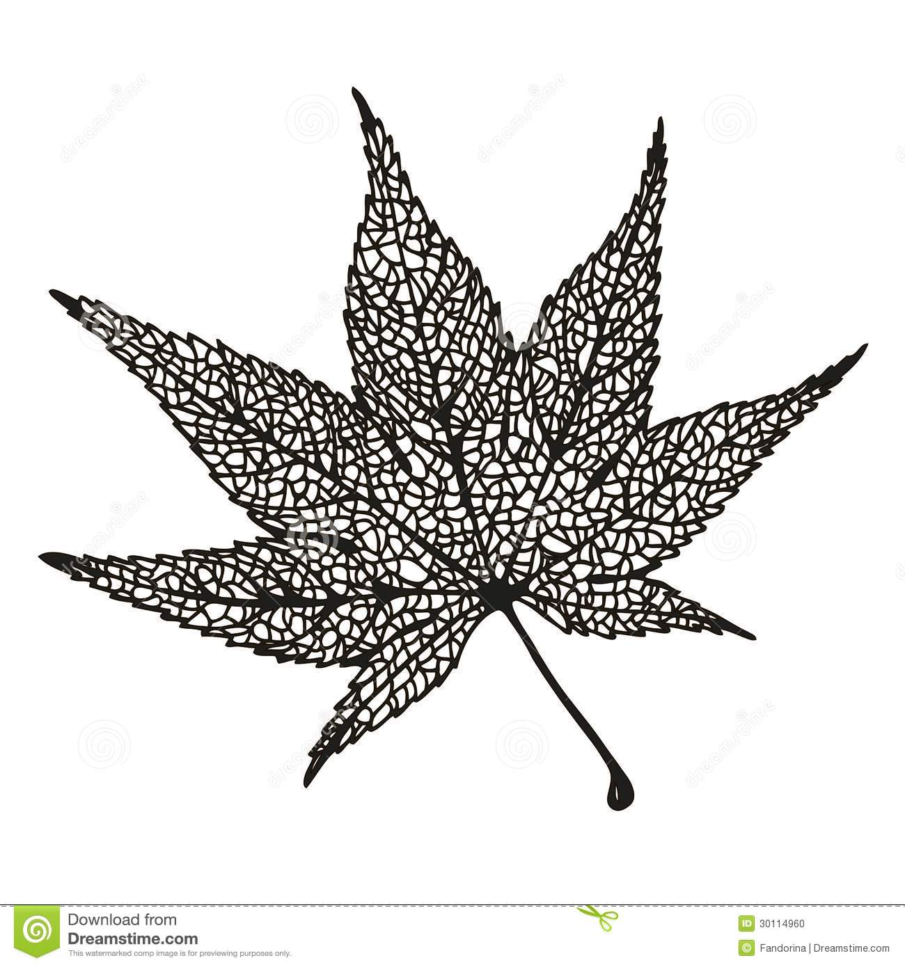 Maple Leaf Drawing Stock Photo - Image: 30114960