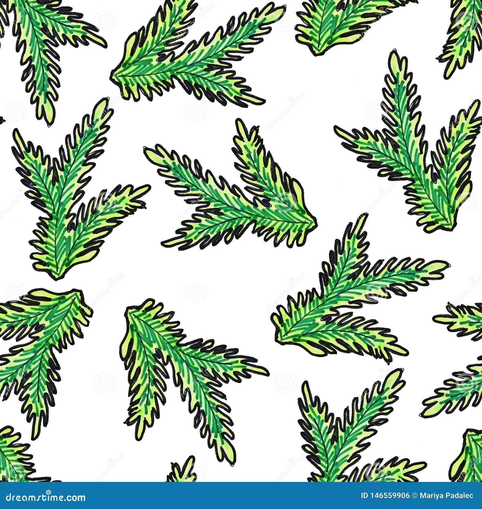 Hand-drawn Kerstmis naadloos patroon Groene tak van de Kerstboom op een witte achtergrond