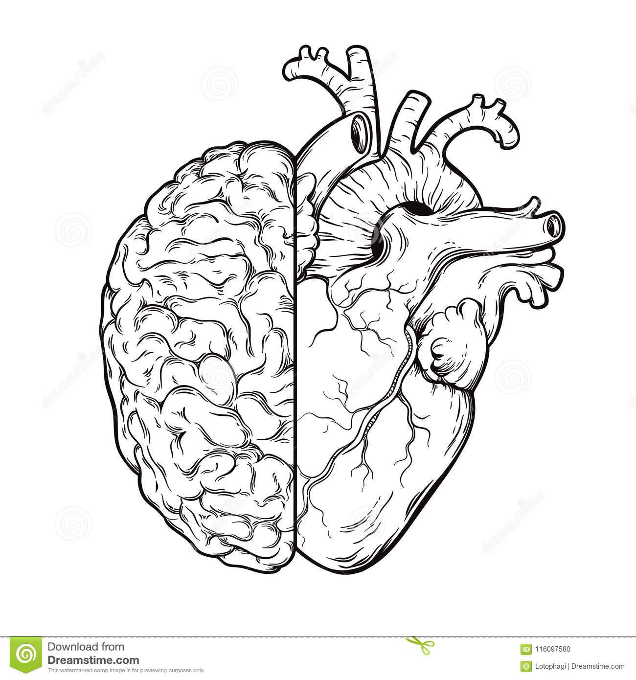 Hand drawn line art human brain and heart halfs - Logic and emotion priority concept. Print or tattoo design isolated on white bac