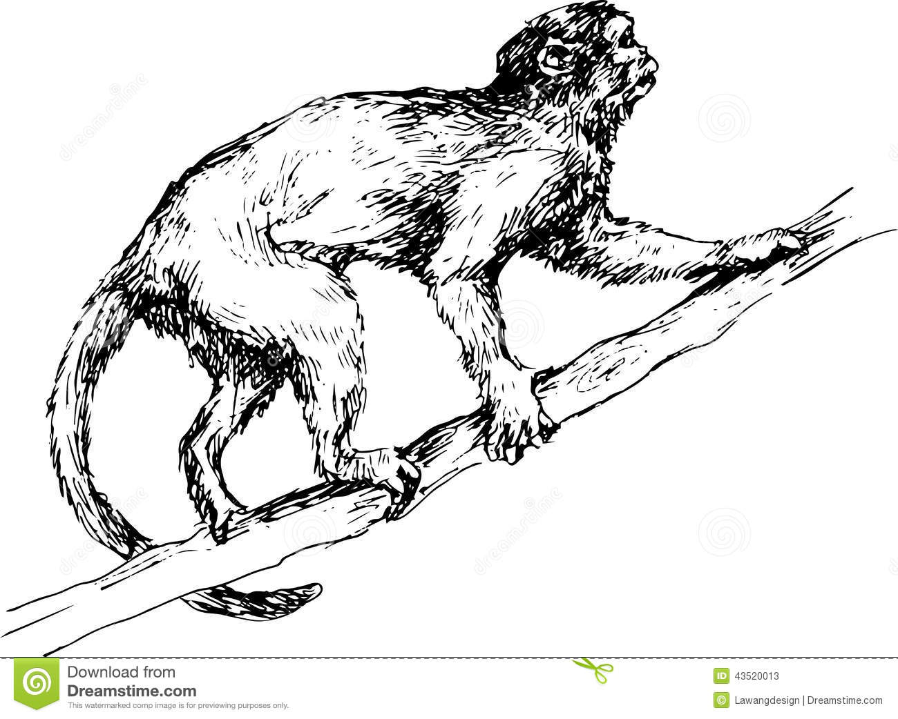 hand drawn monkey illustration 43520013 صور الكسلان ابيض واسود   Photo sloths