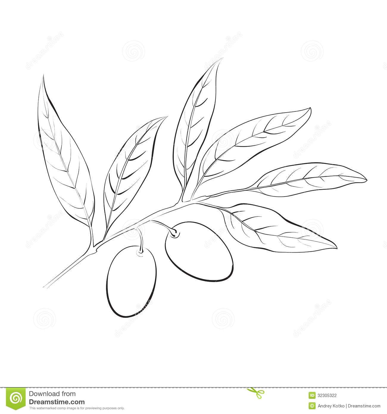 Hand Drawn Olive Branch Stock Vector Illustration Of