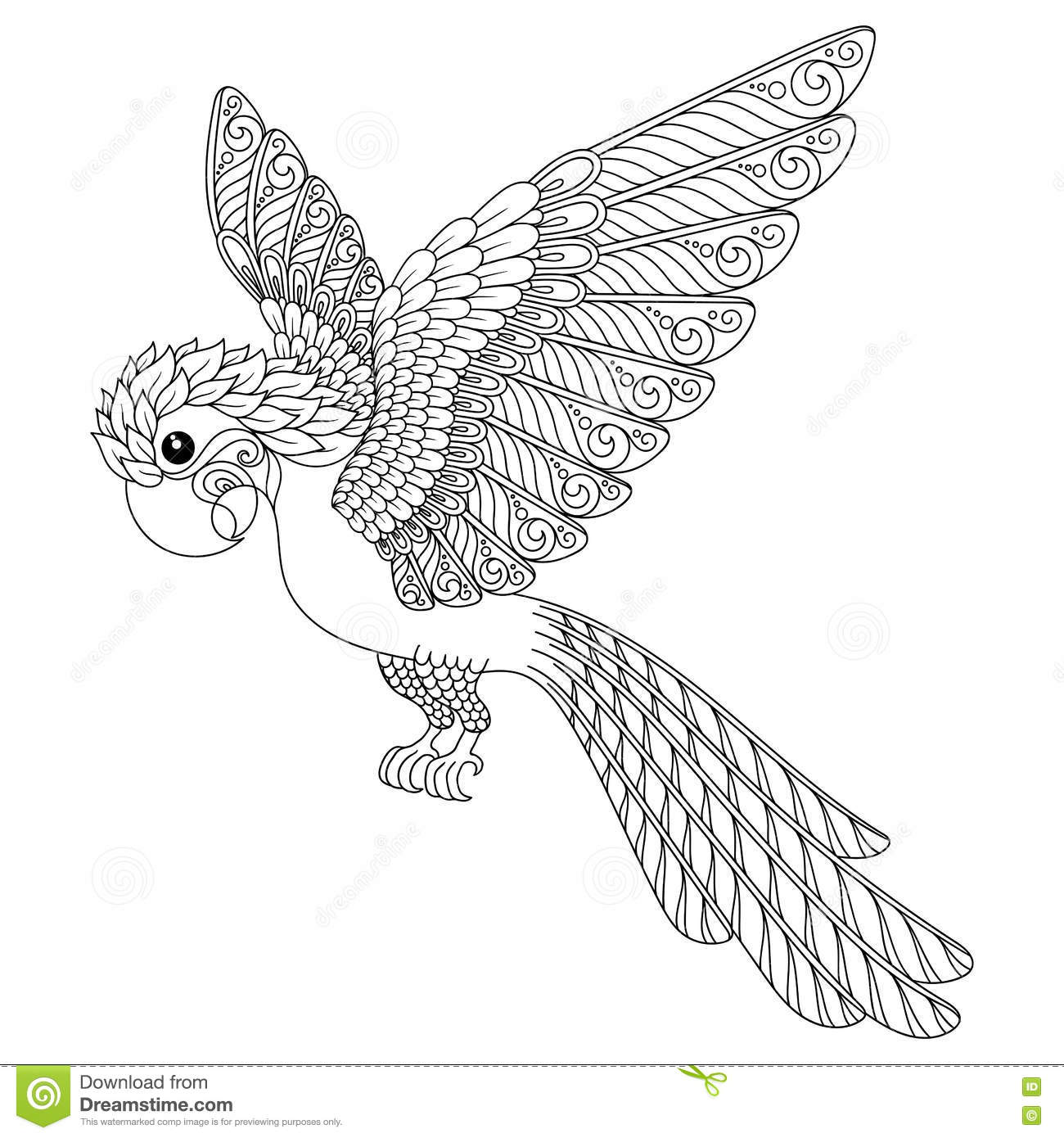 Hand drawn parrot. stock vector. Image of coloring