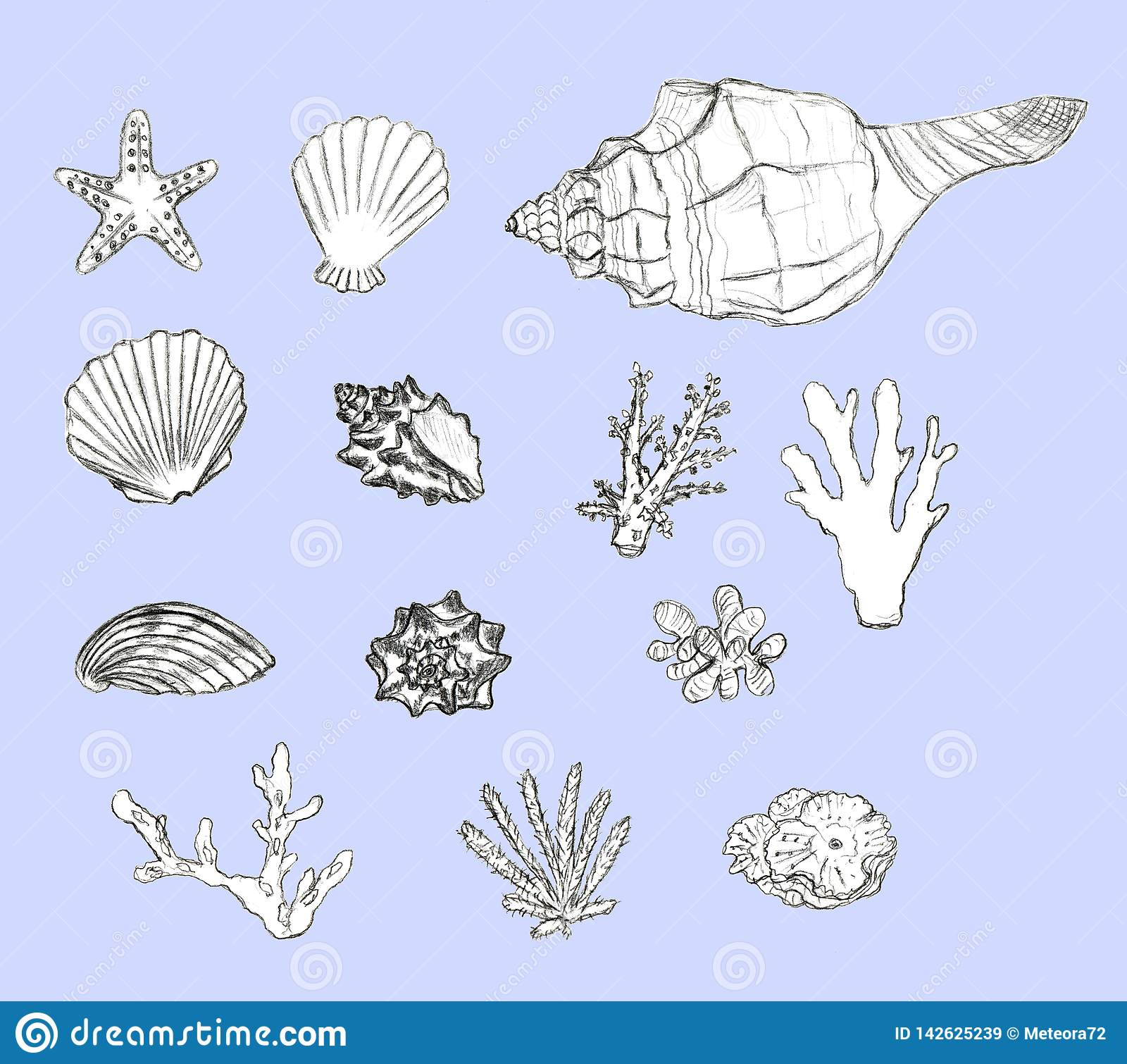 Hand drawn seashells and corals set on blue background