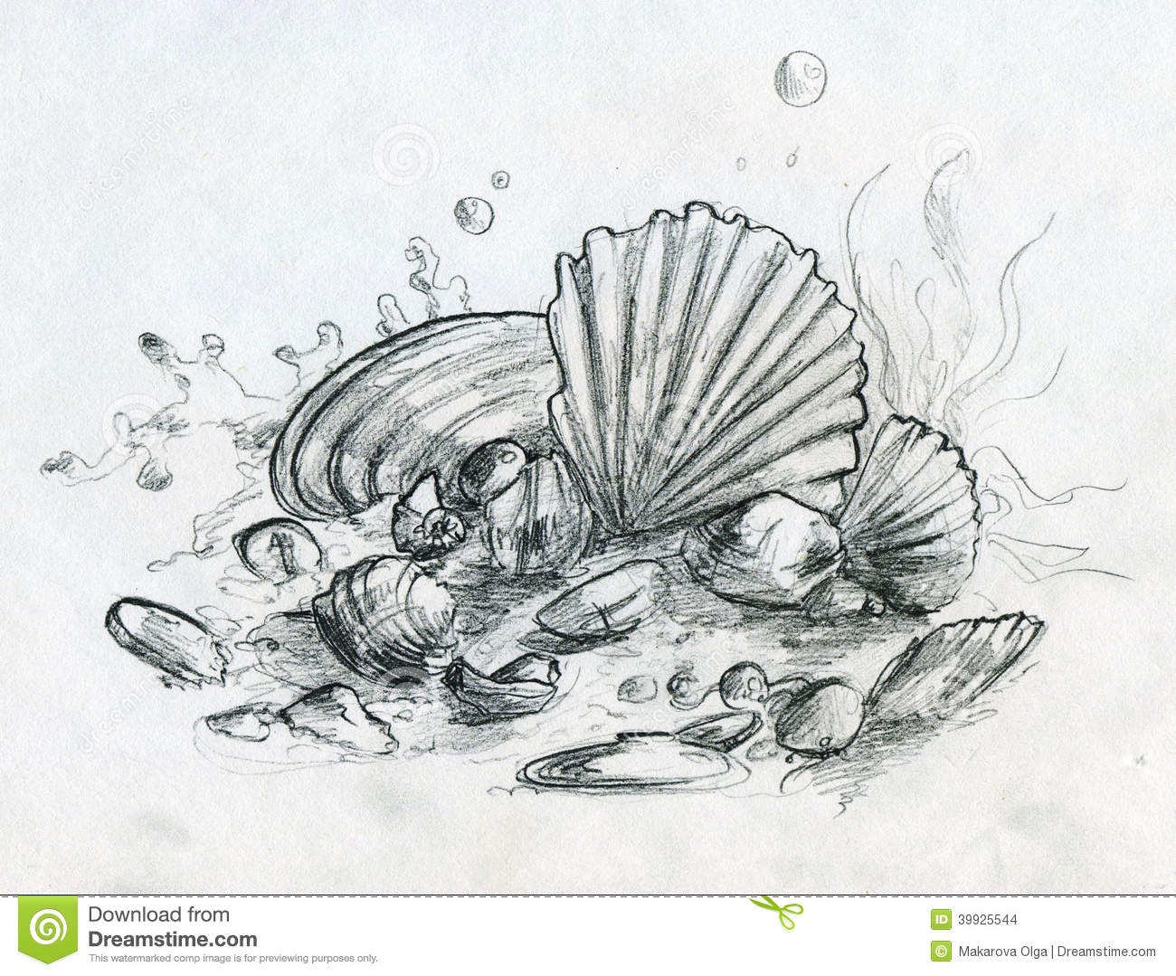 Hand Drawn Pencil Sketch Of Peebles And Shells Stock
