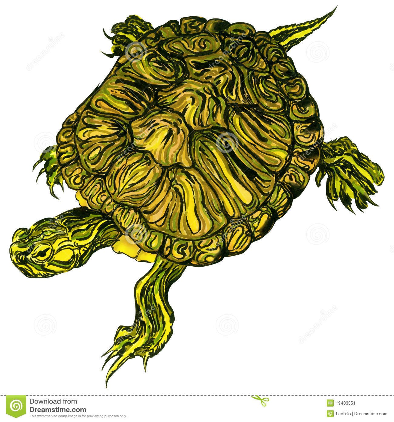 Hand drawn pet trachemys scripta scripta turtle stock for Trachemys scripta