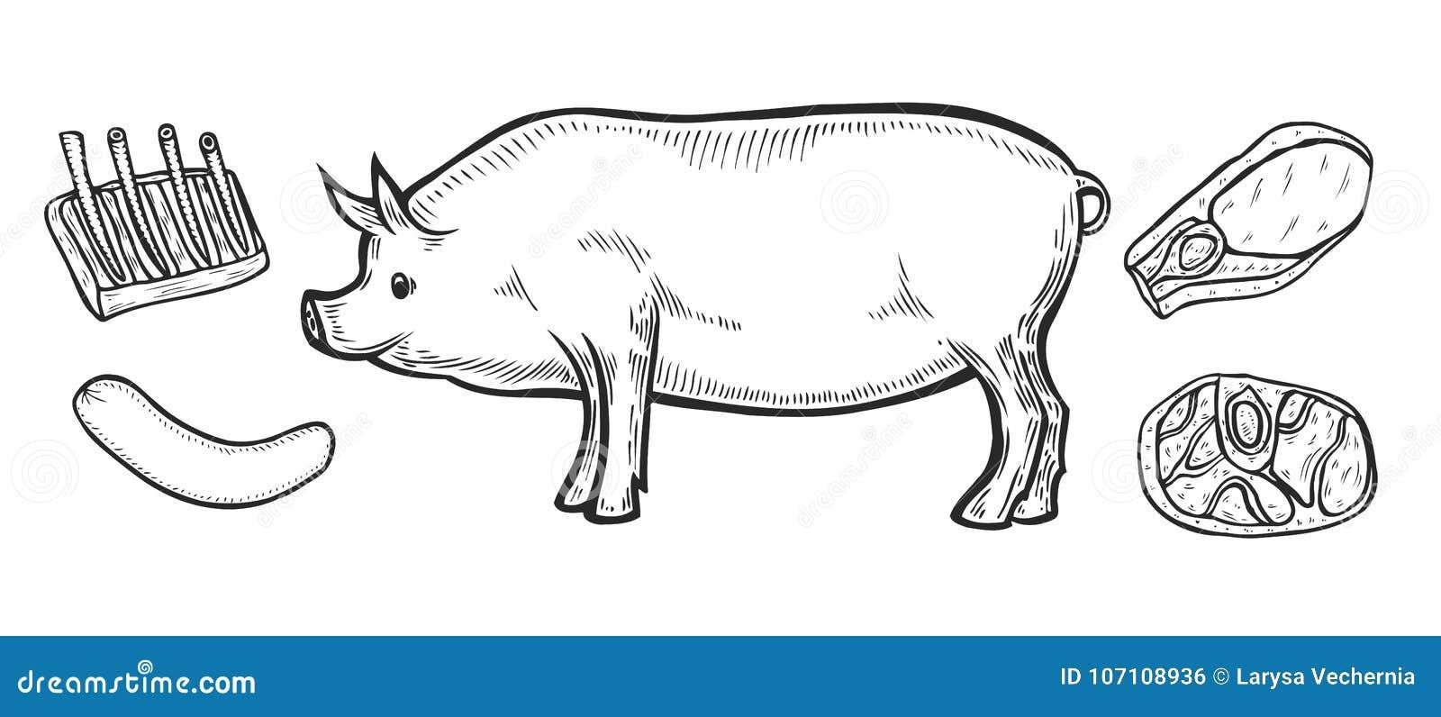 pork meat ham cuts stock vector  illustration of illustration