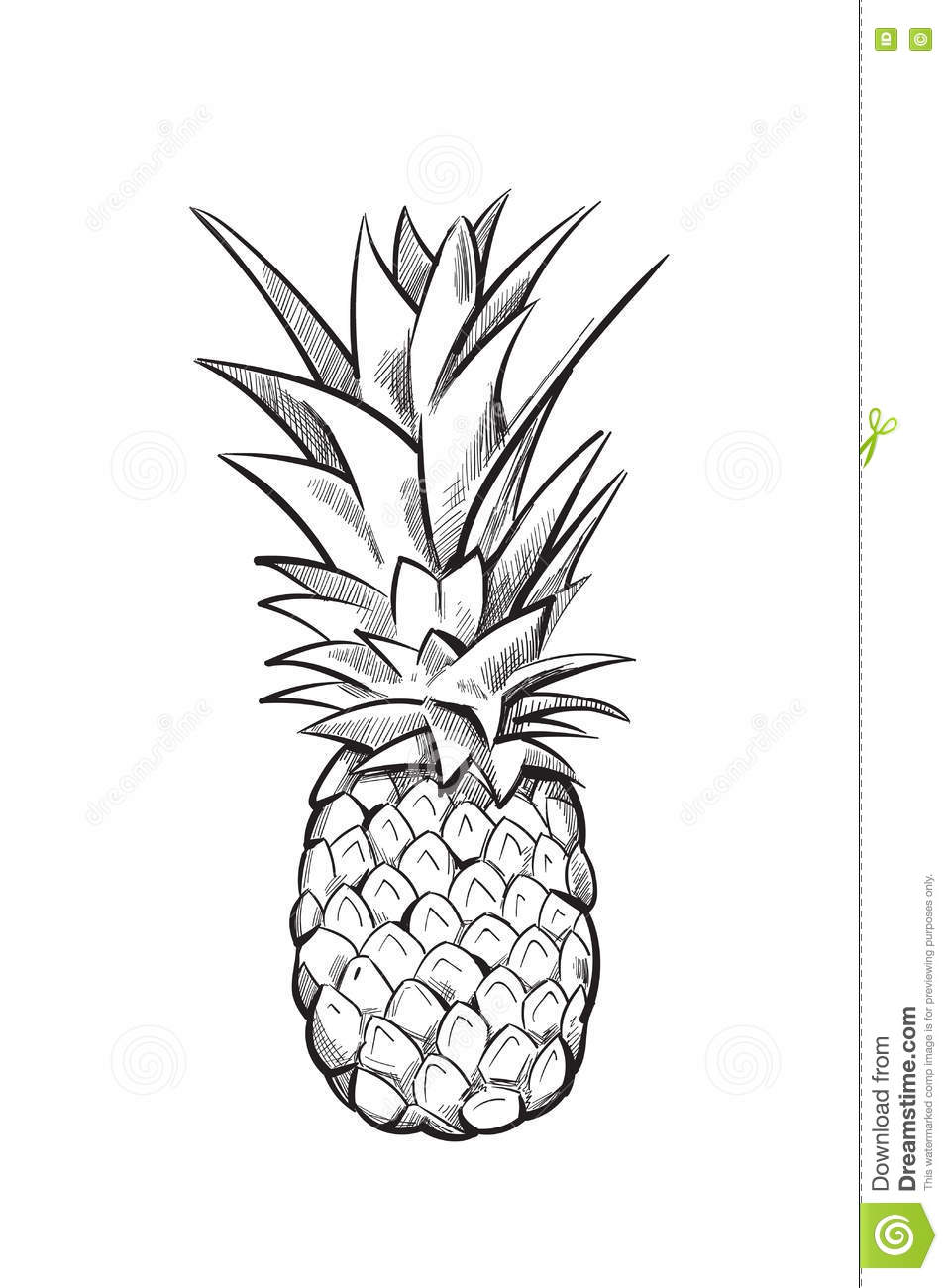 Hand Drawn Pineapple Vector Fruit Stock Vector