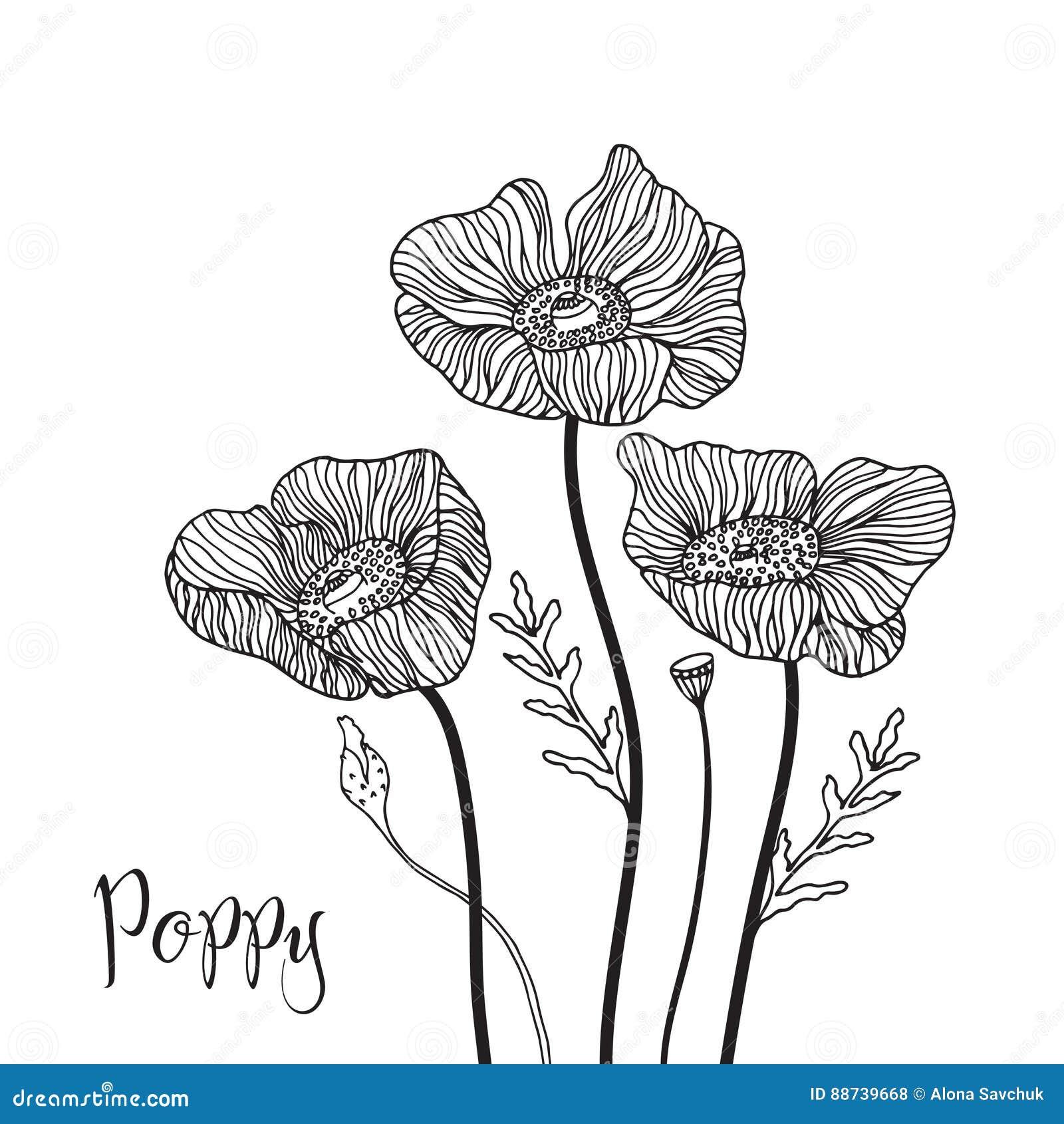Hand Drawn Poppy Flowers Stock Vector Illustration Of Background