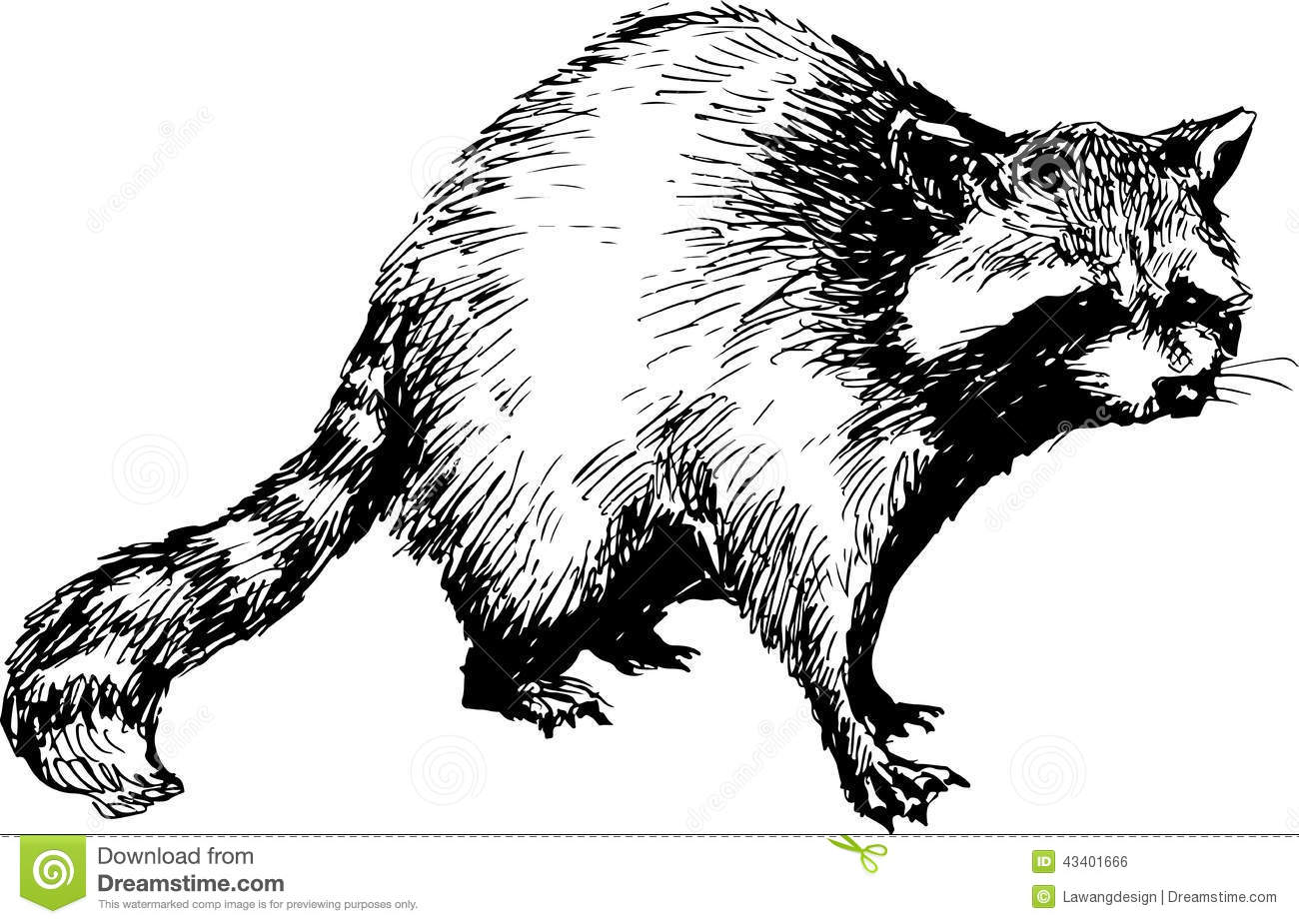 Nl1112 3 additionally Clipart 306 together with Stock Illustration Hand Drawn Raccoon Illustration Image43401666 together with File Crystal 3  PSF additionally Ligue. on 1112