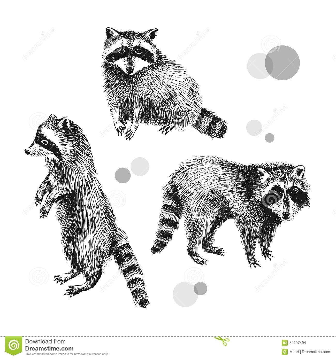 3 hand drawn raccoons stock vector. Image of isolated ... Raccoon Face Illustration