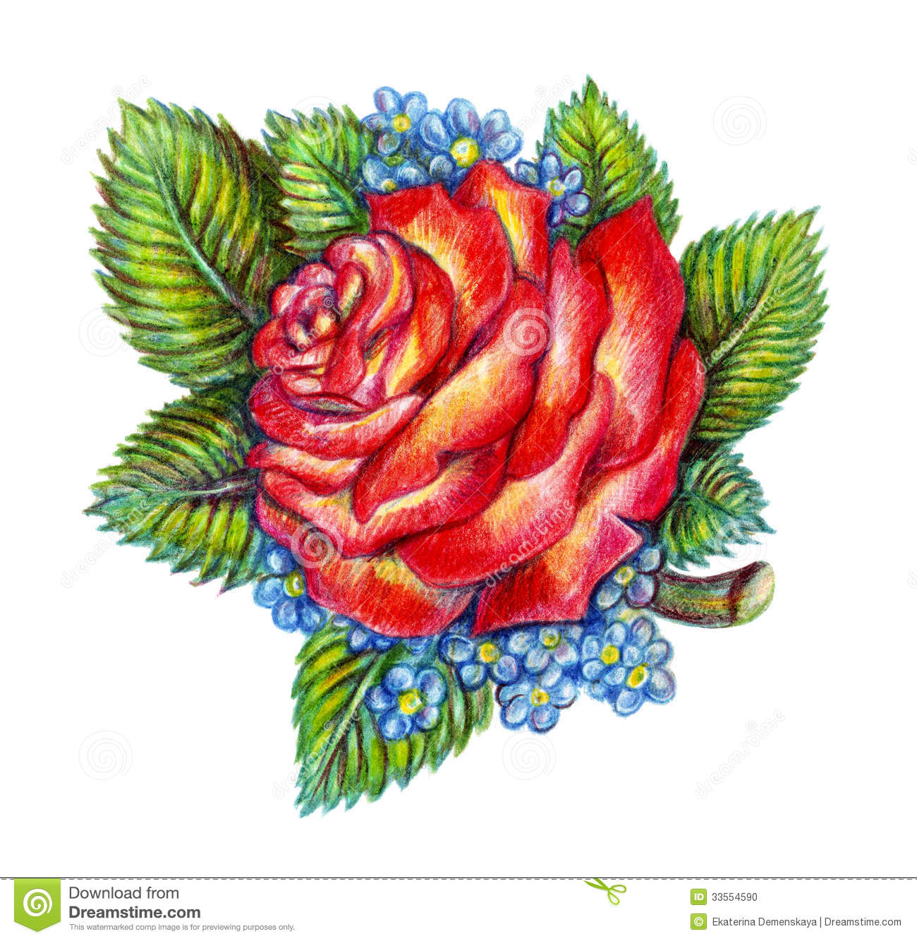 Hand Drawn Red Rose On White Background Stock Photo