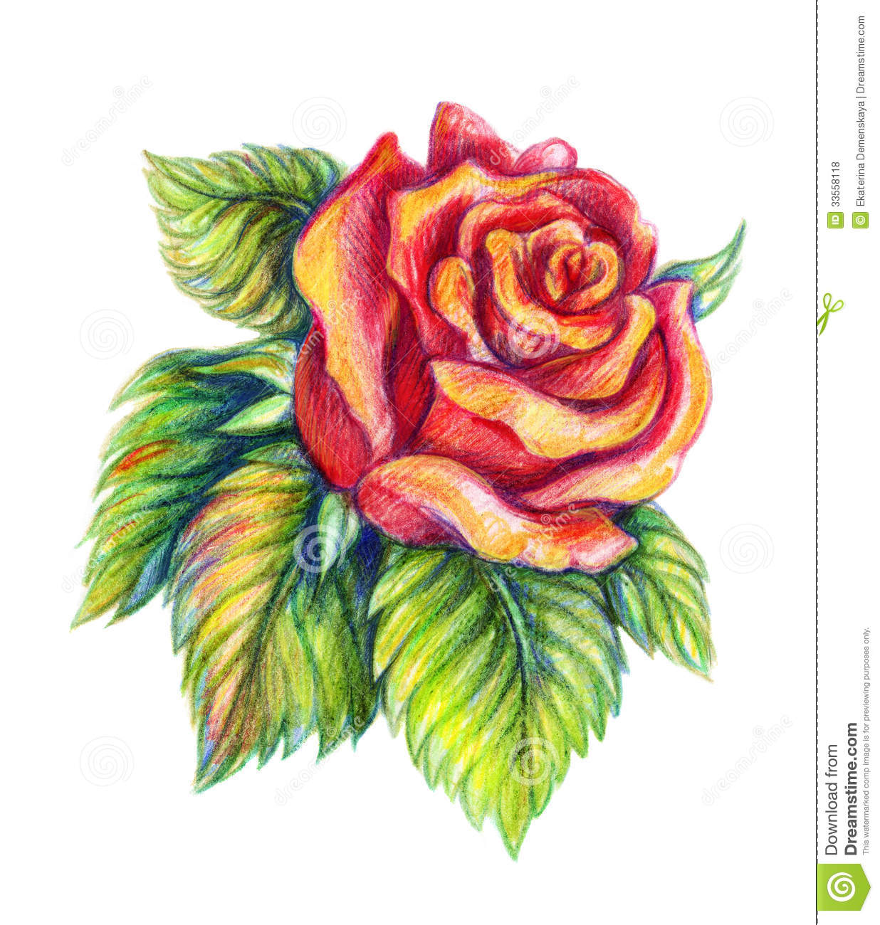 Hand Drawn Red Rose On White Background Royalty Free Stock