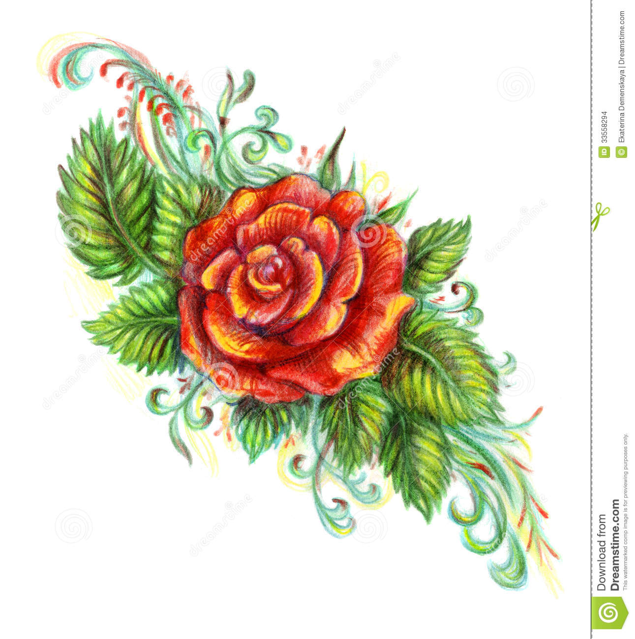 Hand drawn red rose on white background