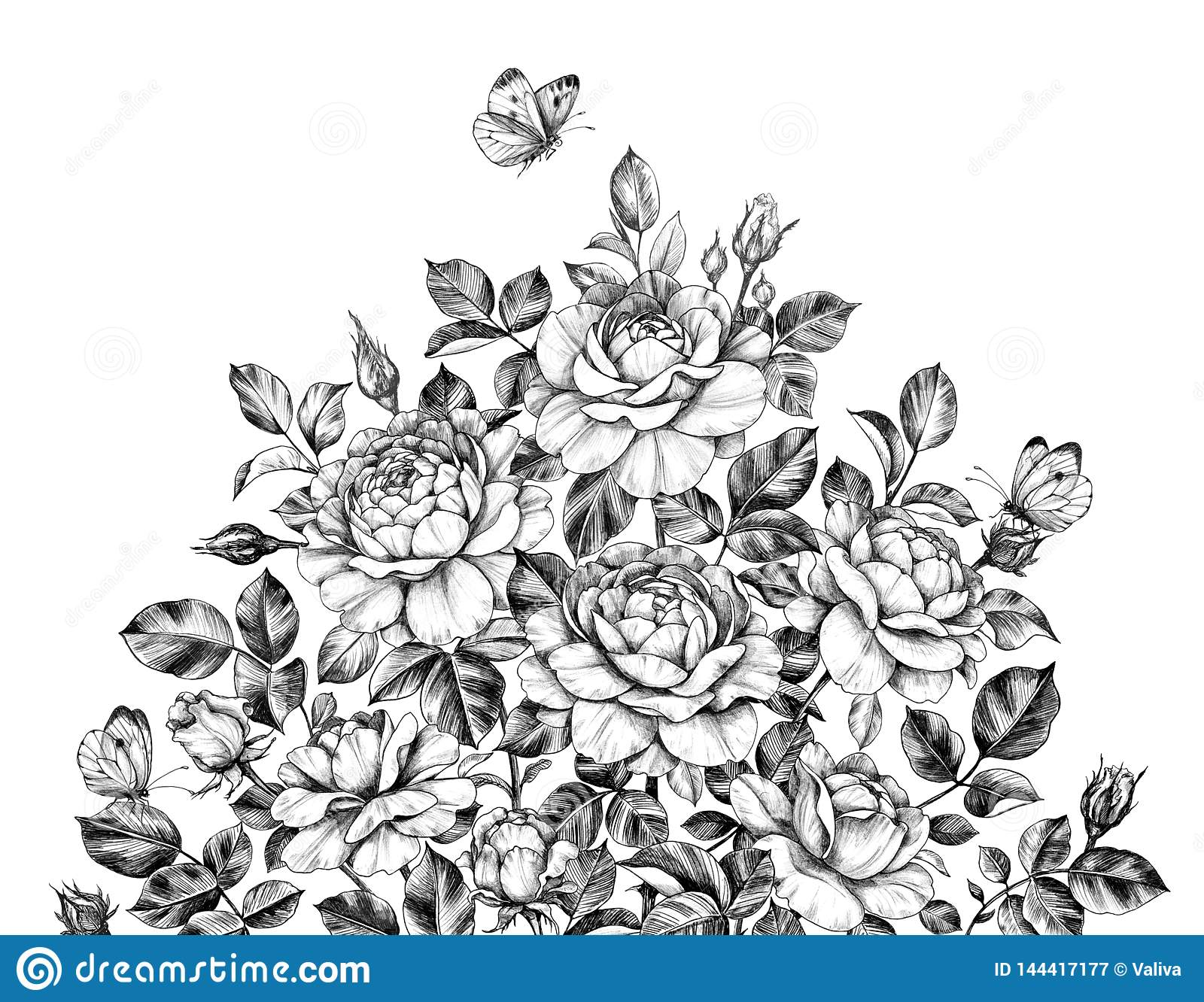 Hand Drawn Rose Bush With Butterflies Stock Illustration