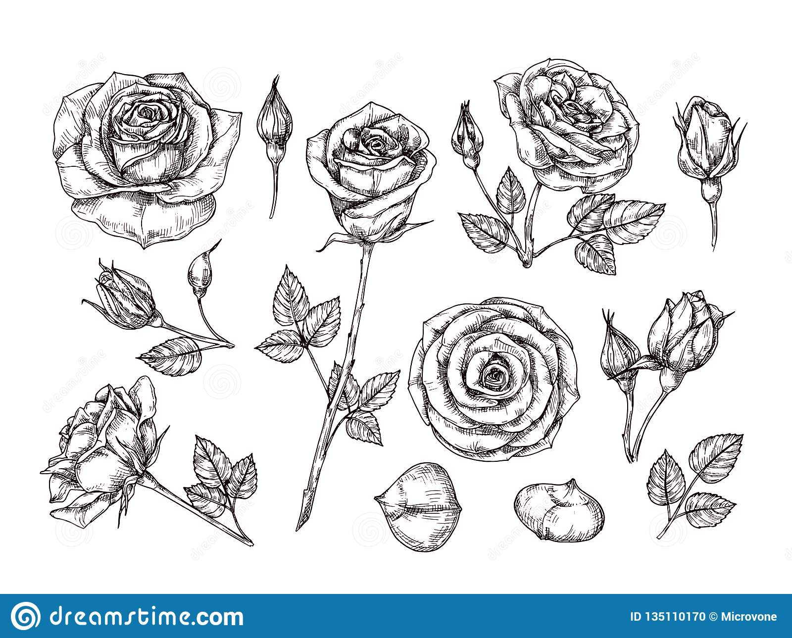 Hand Drawn Roses Sketch Rose Flowers With Thorns And Leaves Black