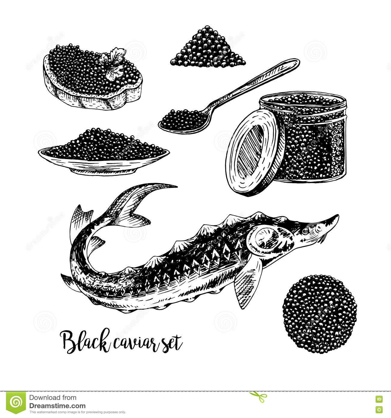 Drawing Lines With Core Graphics : Caviar grunge vector emblem with sturgeons crown
