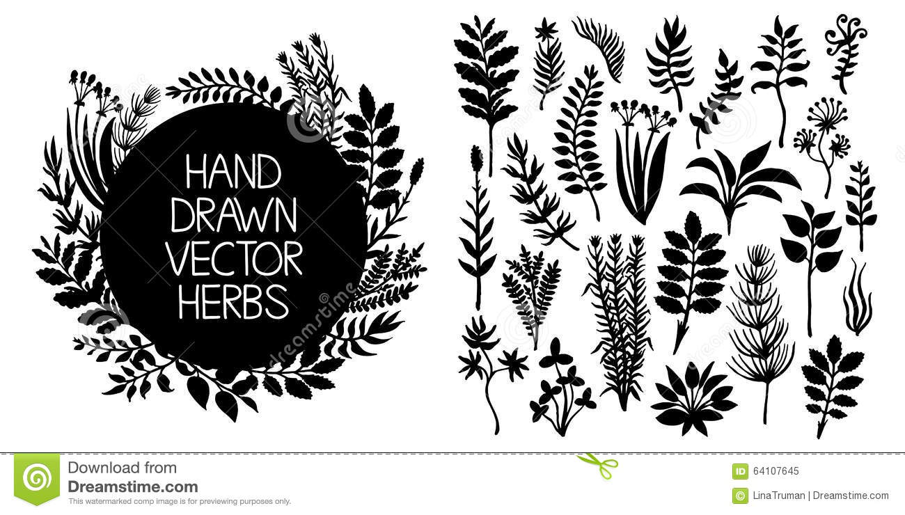 Hand drawn set of herbs and plants. Vector design elements.