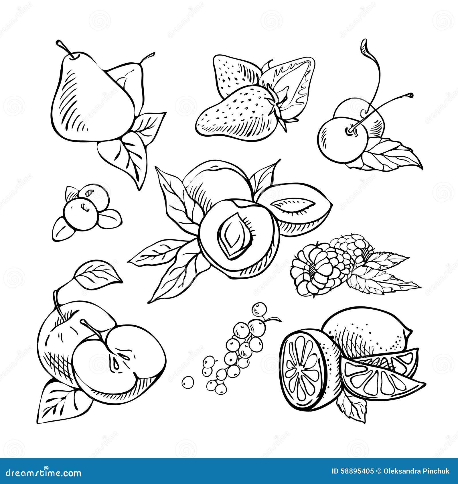 Hand Drawn Sketch Fruit Set. Stock Vector - Image 58895405