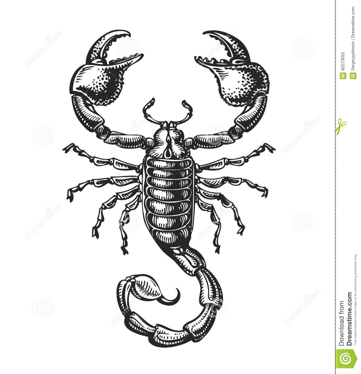 Hand drawn sketch of scorpion tattoo animal vector for Scorpion pictures for tattoos