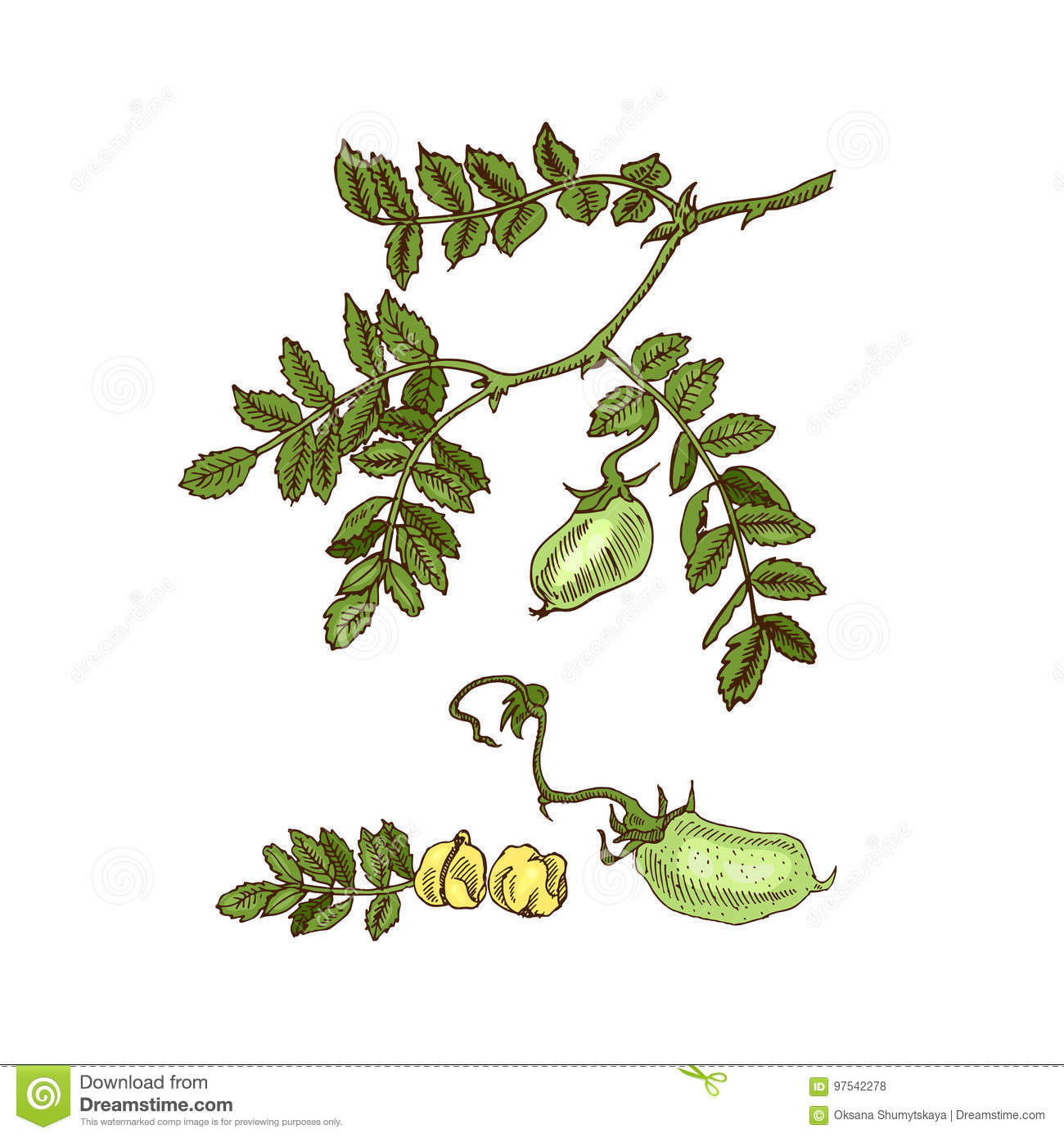 Soybean Cartoons, Illustrations & Vector Stock Images ...