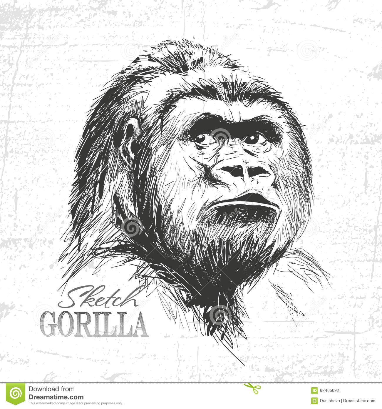 Hand Drawn Sketch Style Illustration Of Monkey Face. Stock