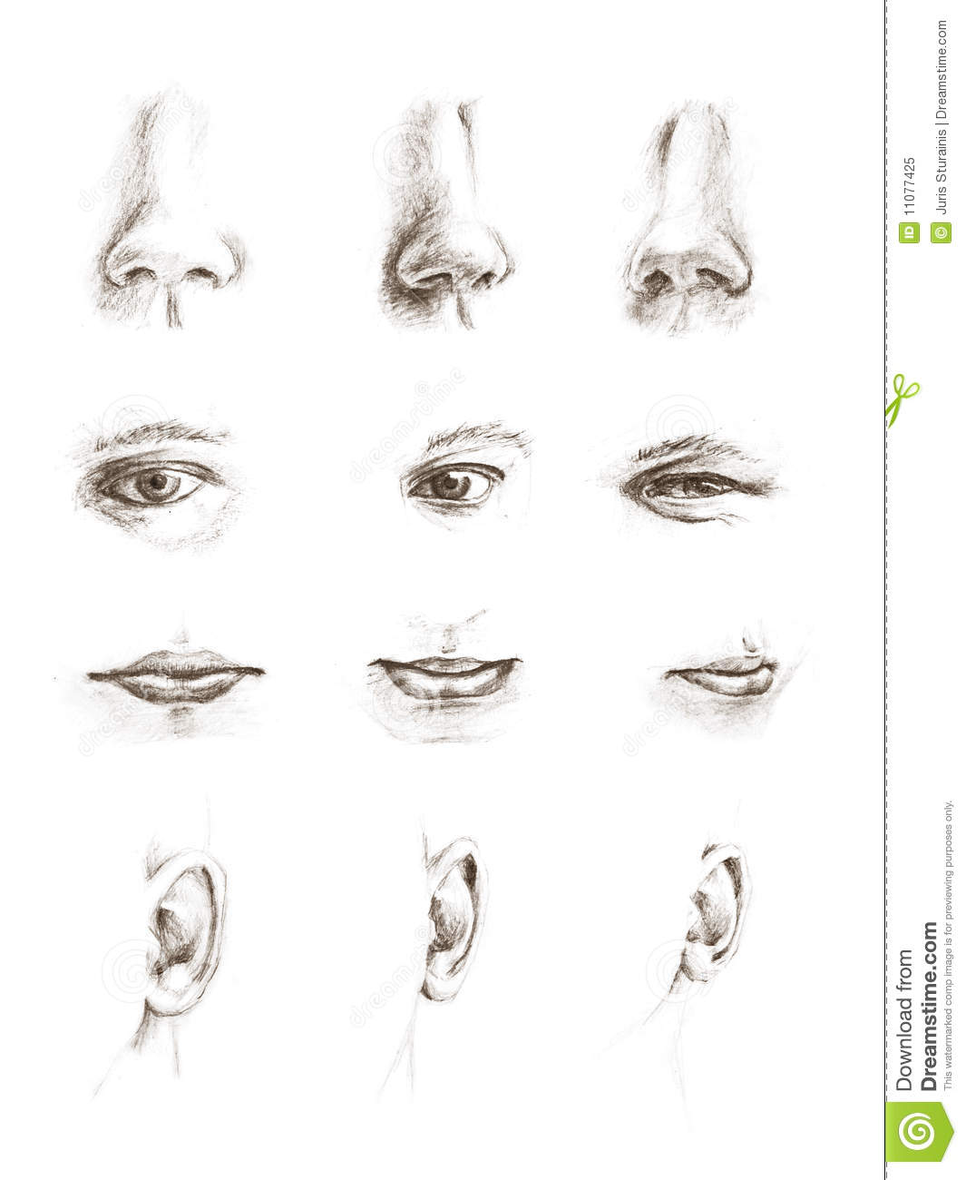 ... Eyes, Ears, Lips And Noses Royalty Free Stock Photo - Image: 11077425