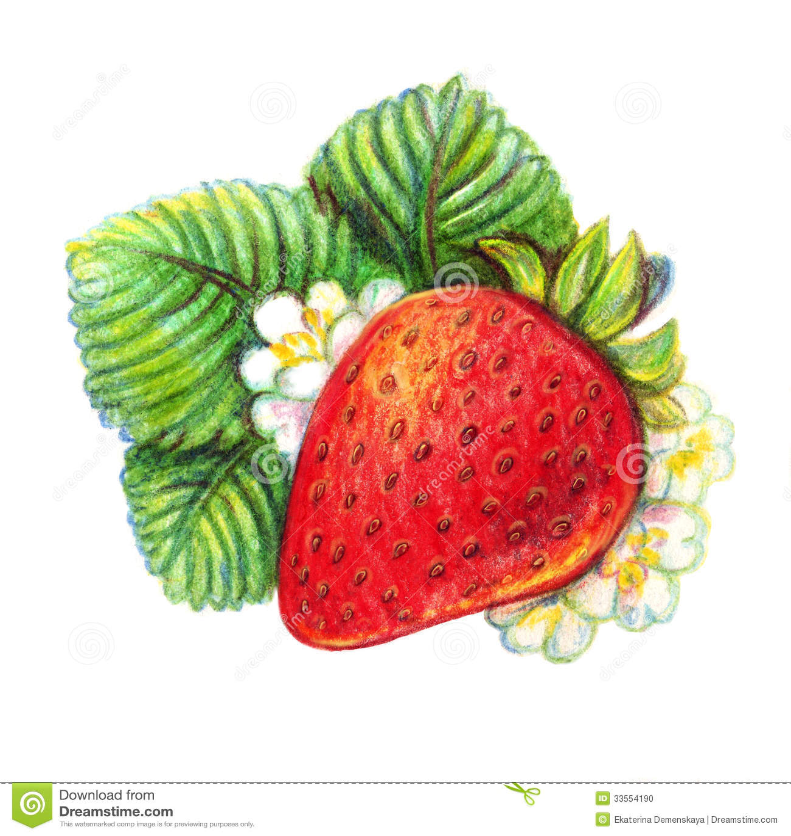 Hand Drawn Strawberry On White Background Stock Photo Image 33554190