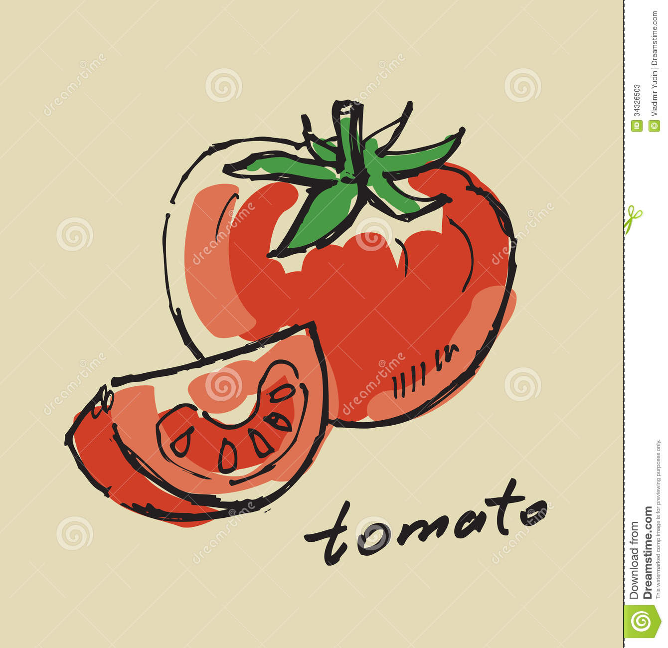 hand drawn tomato stock vector image of hand sketch