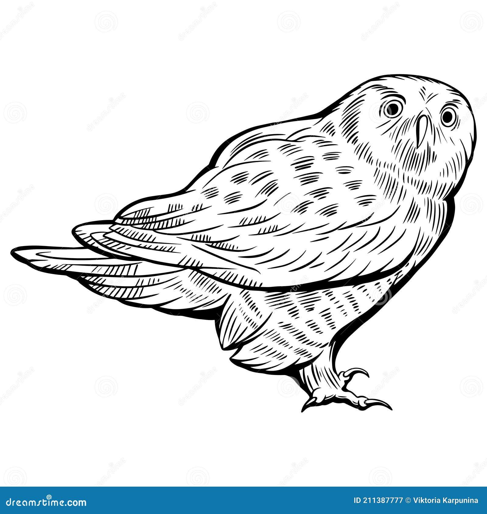 Hawk Coloring Stock Illustrations 250 Hawk Coloring Stock Illustrations Vectors Clipart Dreamstime