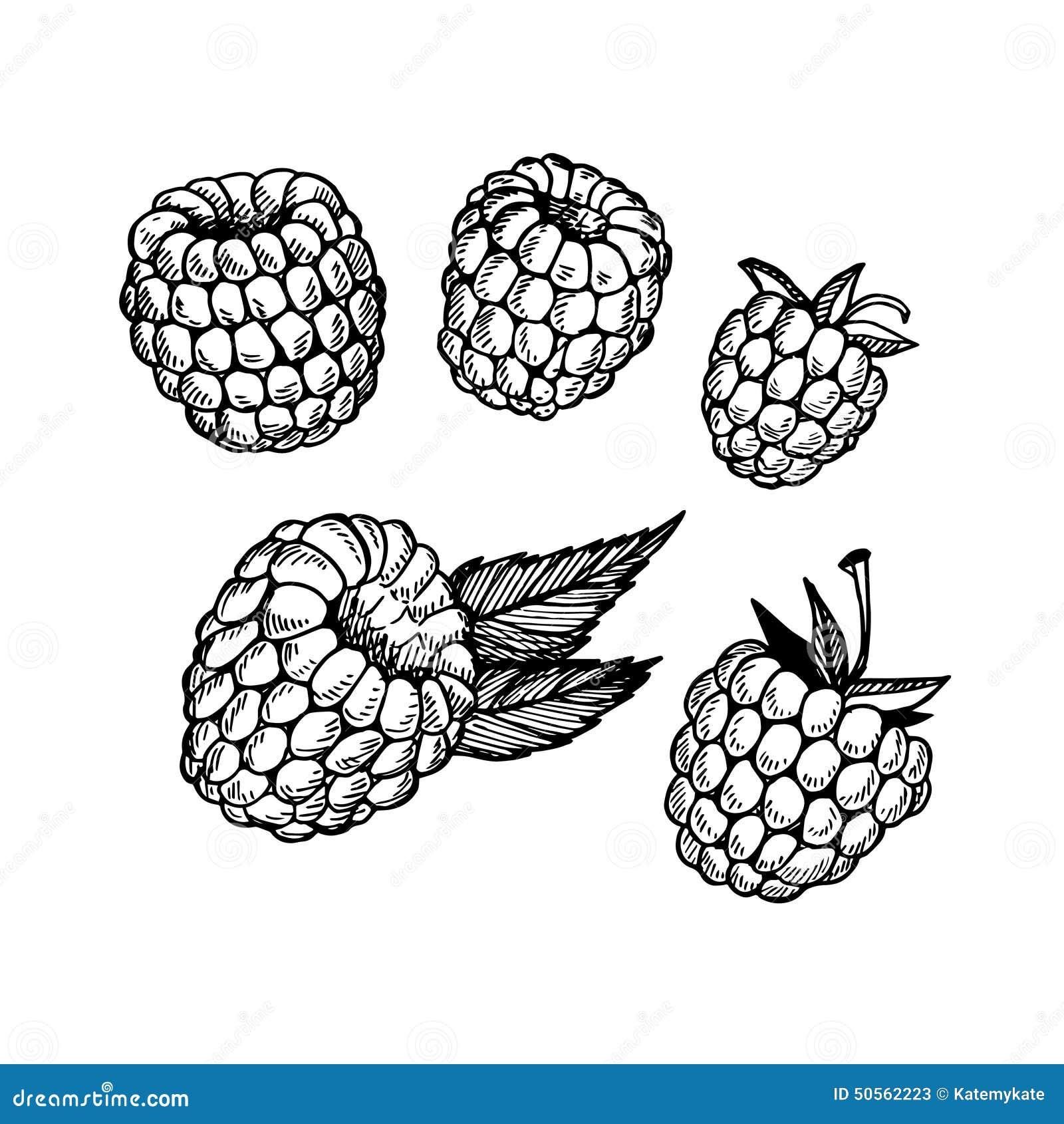 Raspberry Shortcake Bush