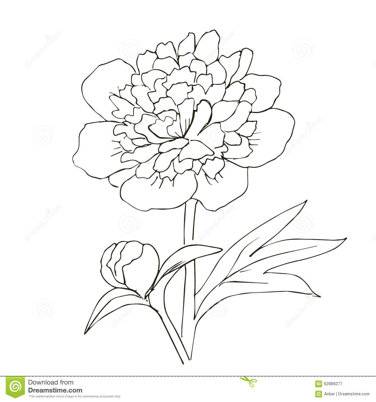 Jpg To Line Art : Hand drawn vector with peony flower stock image