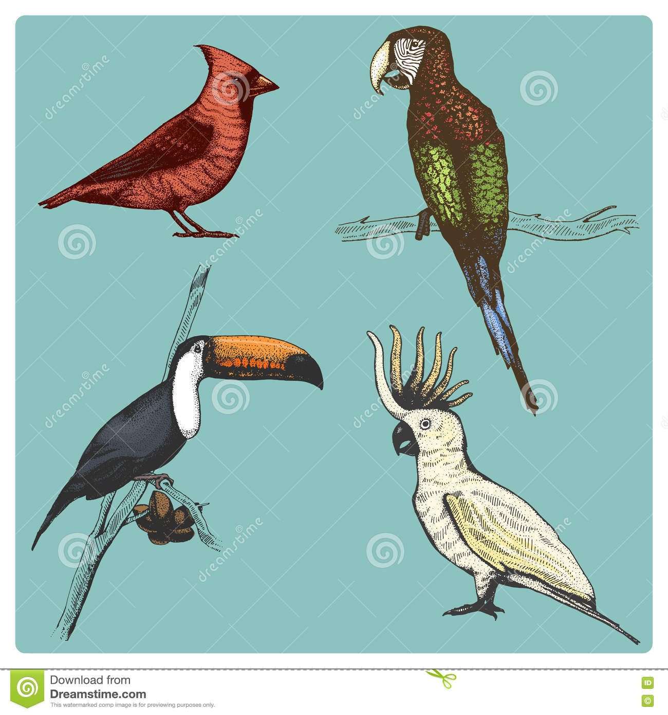 Hand drawn vector realistic bird, sketch graphic style,