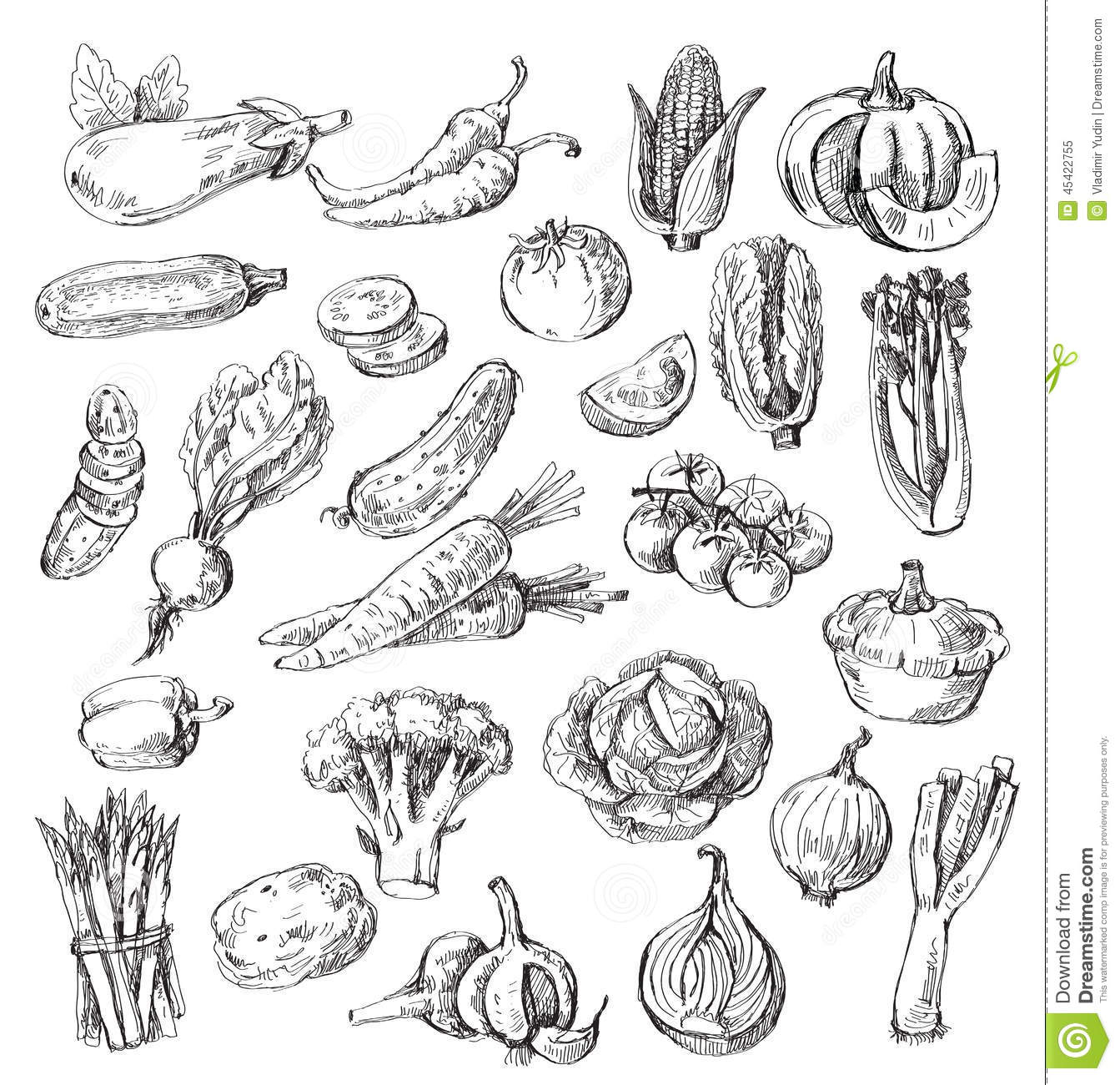 Hand Drawn Vegetable Stock Vector - Image: 45422755