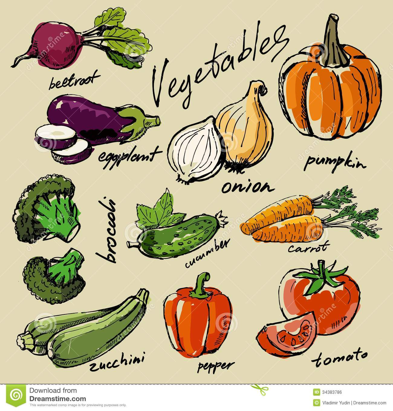 Hand drawn vegetables stock vector. Illustration of onion ...