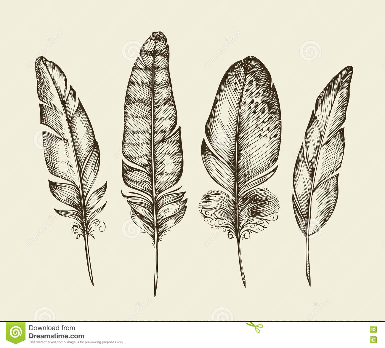 Hand Drawn Vintage Bird Feathers. Sketch Writing Feather ...